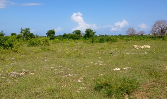 Land for sale in Vipingo, Mombasa