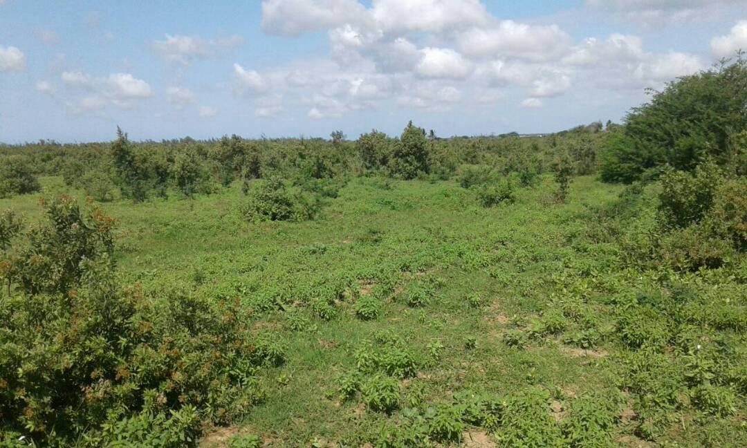 Land for Sale in Malindi