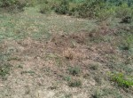 mavueni-land-for-sale