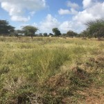Kilifi Land for Sale