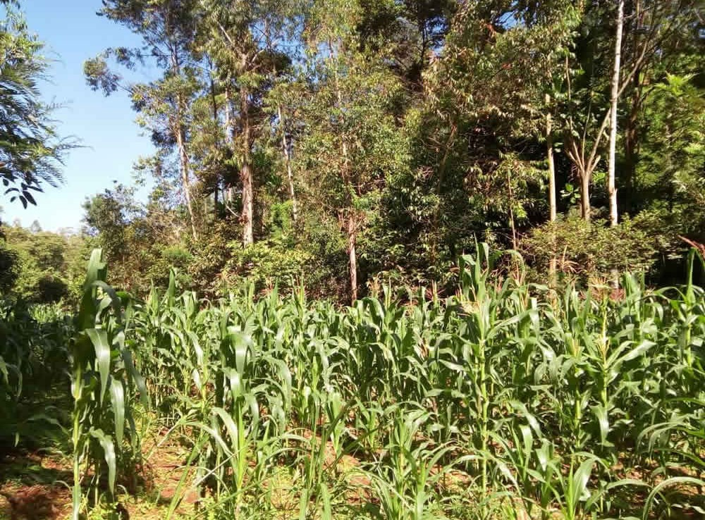Land for Sale in Chogoria