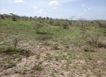 konza-land-for-sale