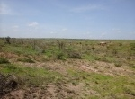 land-for-sale-in-konza