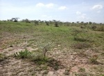 land-for-sale-konza